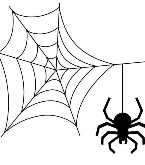 蜘蛛の巣とクモ