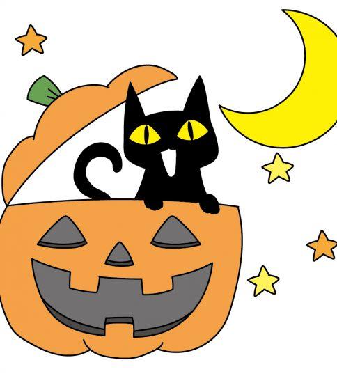 黒猫とかぼちゃ