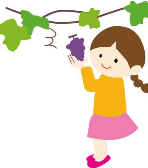 ぶどうを収穫する女の子