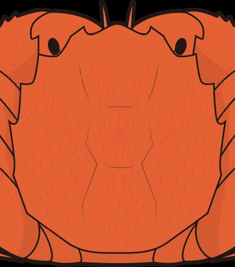 丸っとした蟹