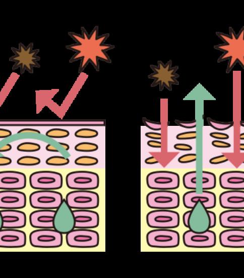 乾燥肌と正常な肌の違い説明図